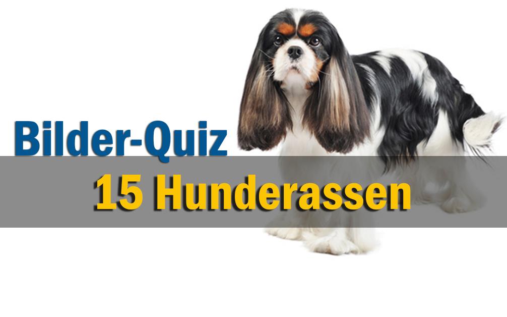 Bilder-Quiz - Hunderassen