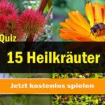 quiz heilkräuter